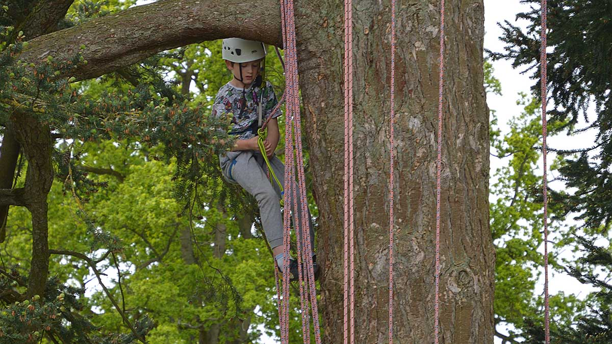 Children enjoying the opportunity to climb trees