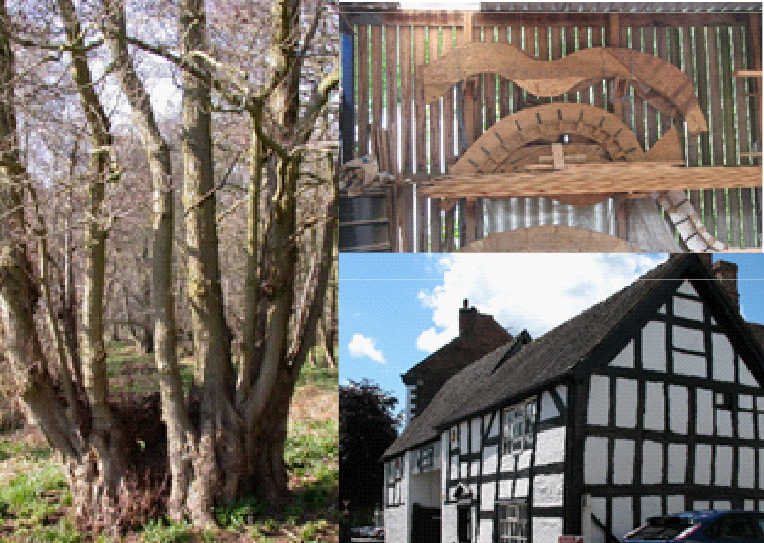Investigating Tree Archaeology Conference – Sheffield