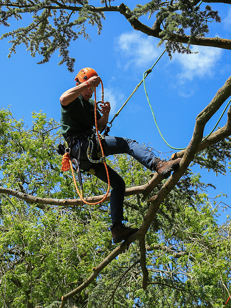 ARB Approved Contractor climbing tree