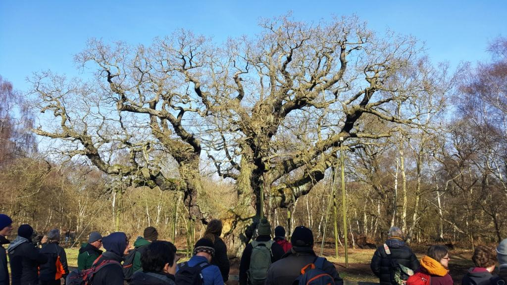 IN MERRY ENGLAND in the time of old, there lived within the green glades of Sherwood Forest, near Nottingham Town, a famous tree whose name was Major Oak.