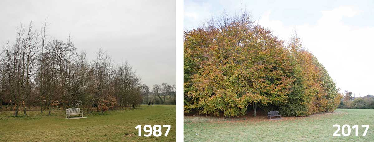 To the Left: Oaks Park, 2008. These trees were planted in November 1987. To the Right: The view in November 2017.