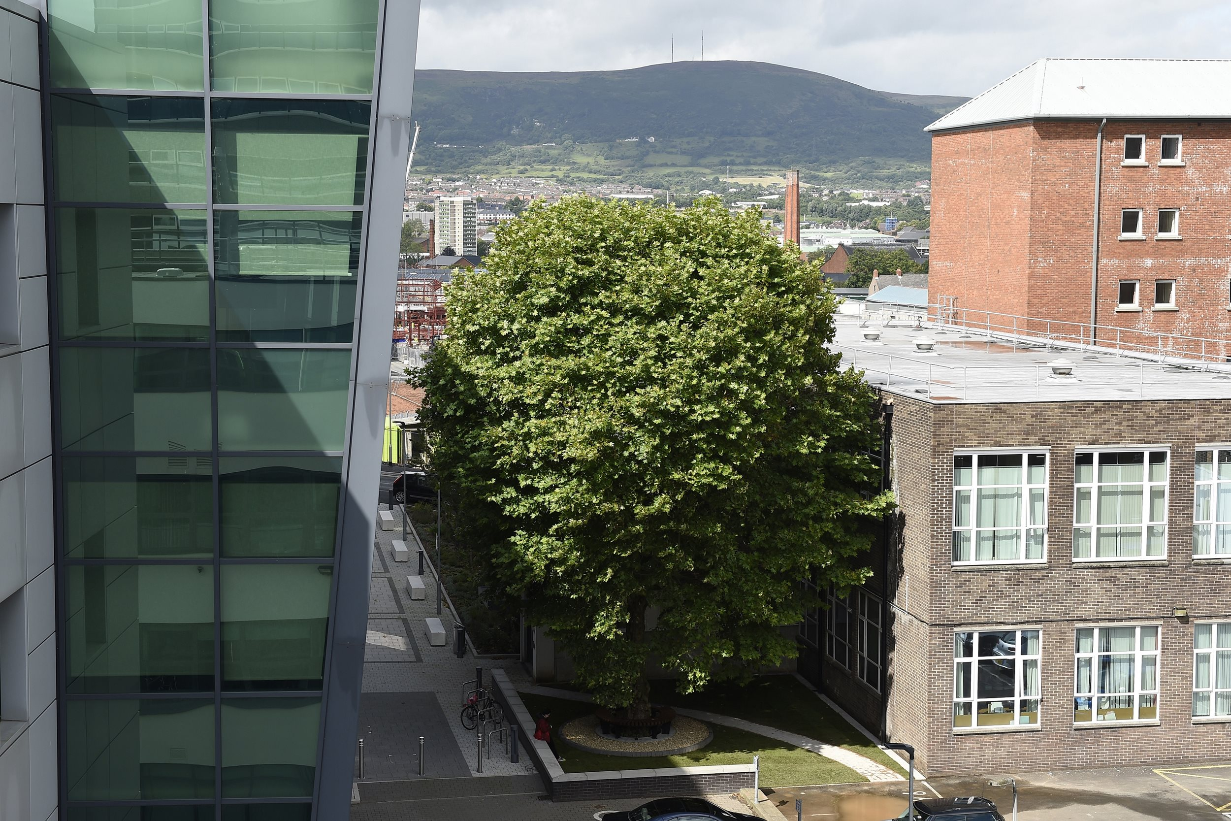 The Erskine House Tree, between Belfast City Hospital and Queen's University Belfast, was crowned Tree of the Year 2017.