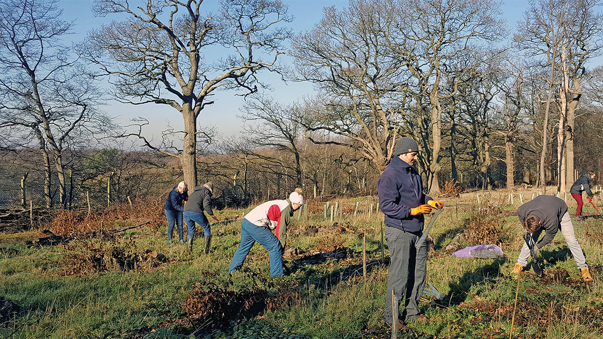 WSP staff carrying out voluntary tree planting work in an urban woodland in Harlow. (Photo: WSP)