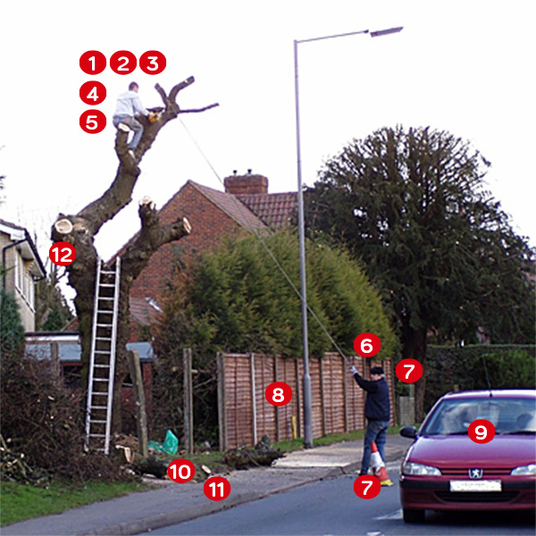 Are you at risk from a rogue tree surgeon?