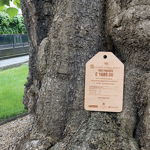 A plaque presented to Baroness Fookes explaining the value of a single Catalpa tree in the New Palace Yard at Westminster.