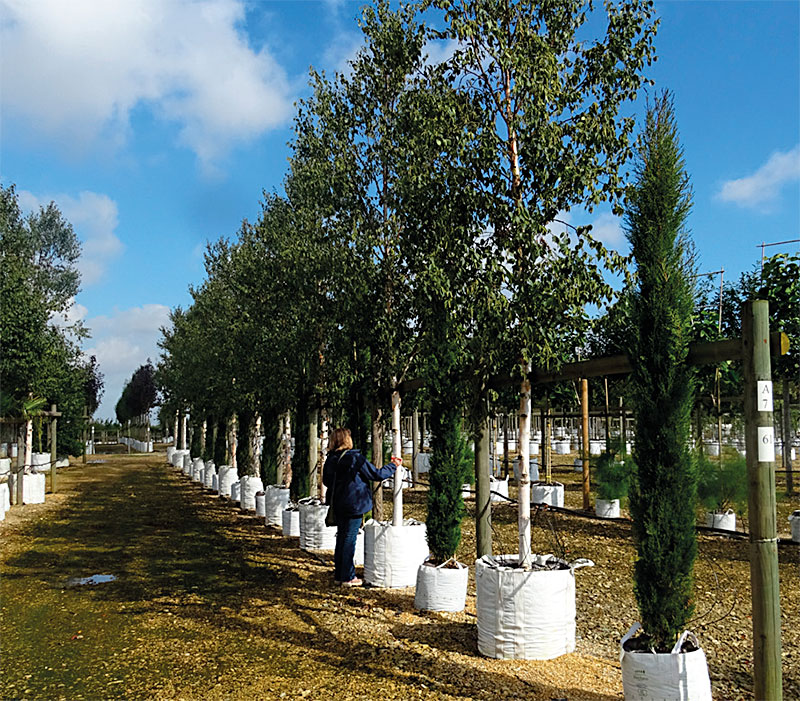 A dilemma for tree nurseries: What to grow to meet future requirements