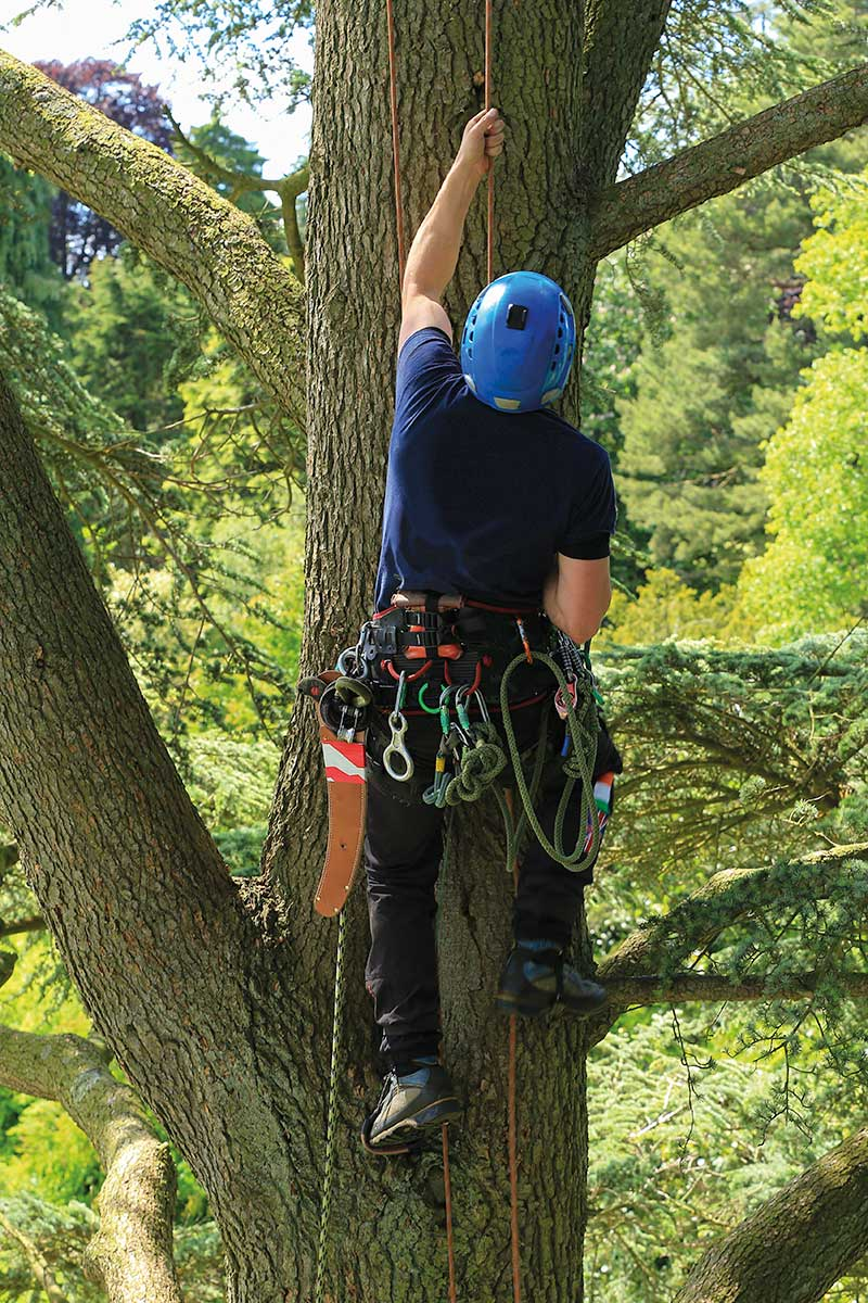 Arboricultural Association - Choose your Tree Surgeon?