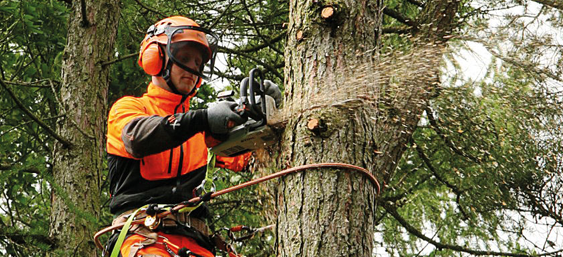 Arboricultural association home arb approved contractor preparation workshop fandeluxe Image collections