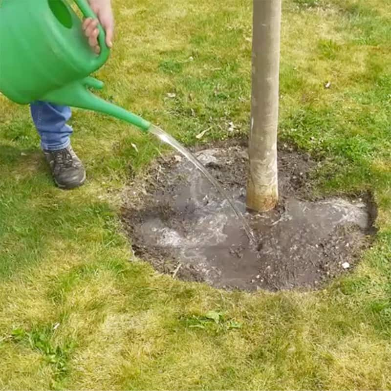 TiCL National Tree Watering Scheme