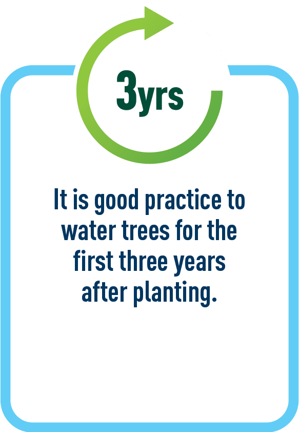 It is good practice to water trees for the first three years after planting.