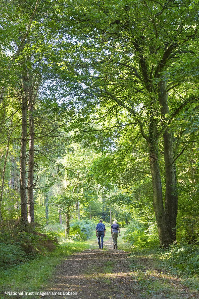 Woodland walks on the Killerton Estate – ©National Trust Images/James Dobson