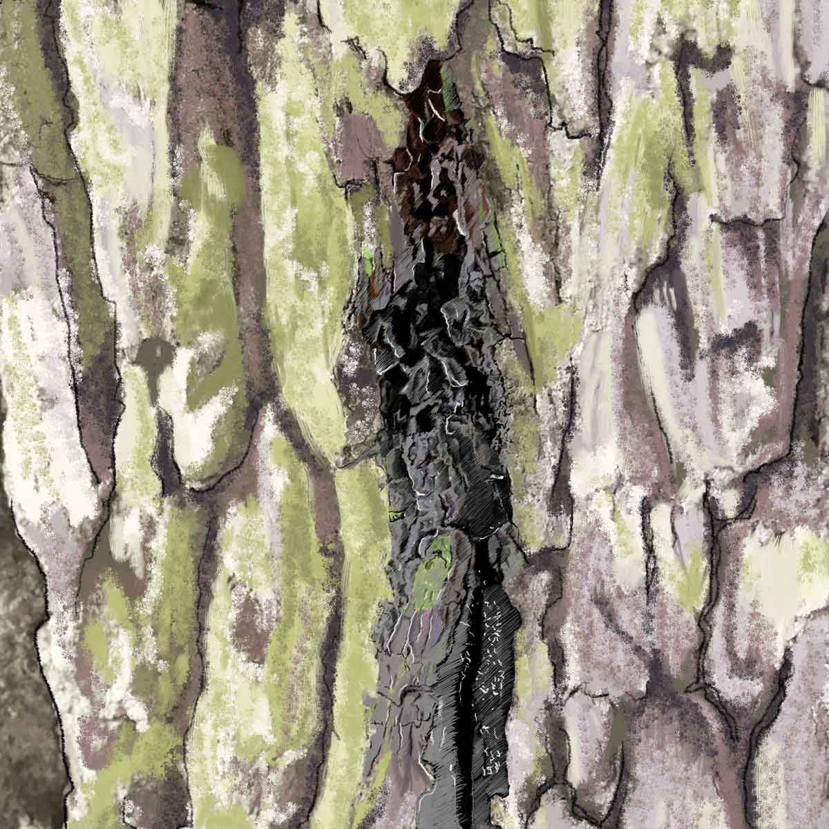 Acute Oak Decline –
