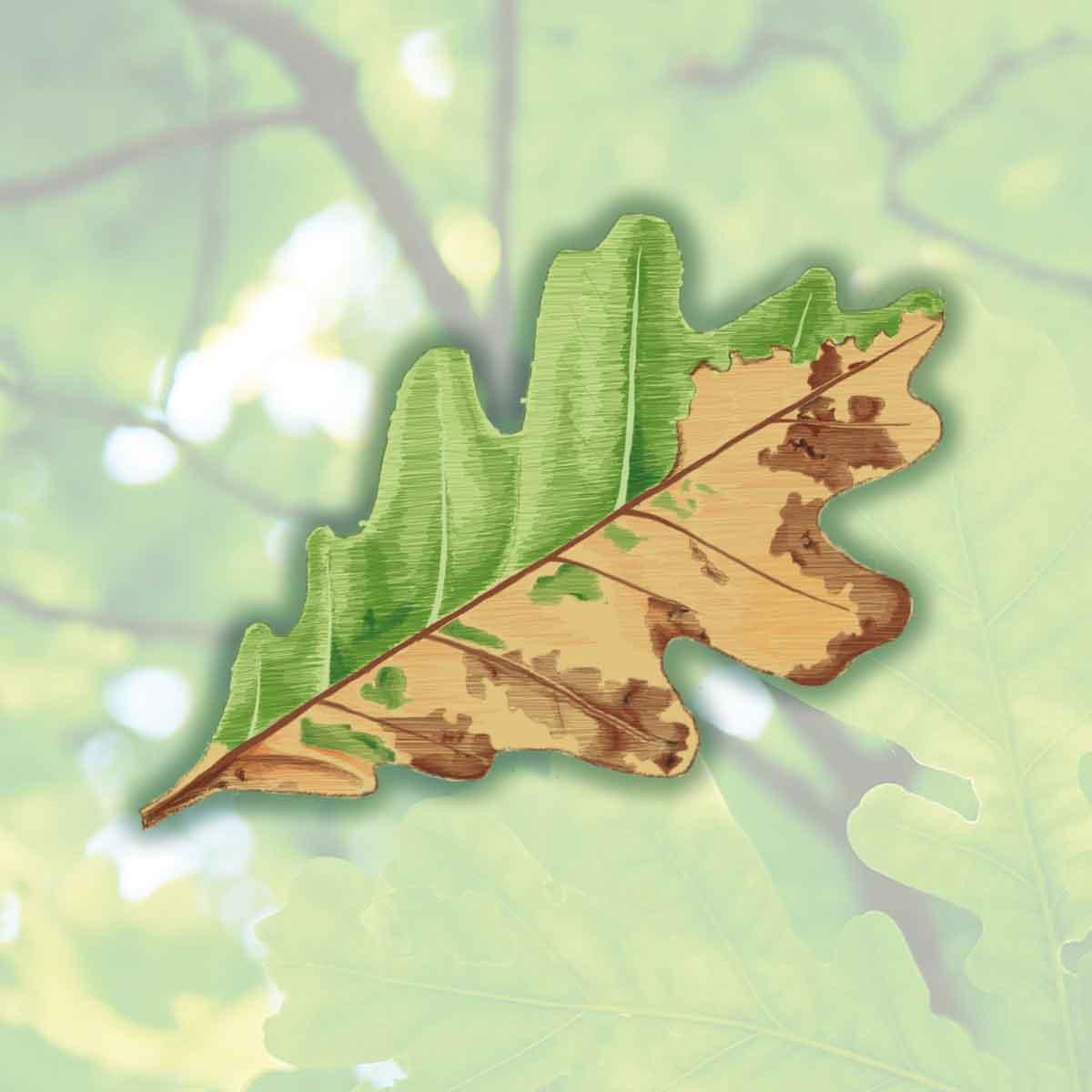 Oak Wilt – Ceratocystis fagacearum