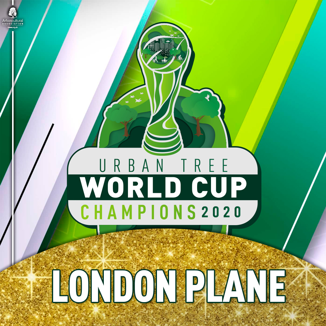Winner of the 2020 Urban Tree World Cup – London Plane