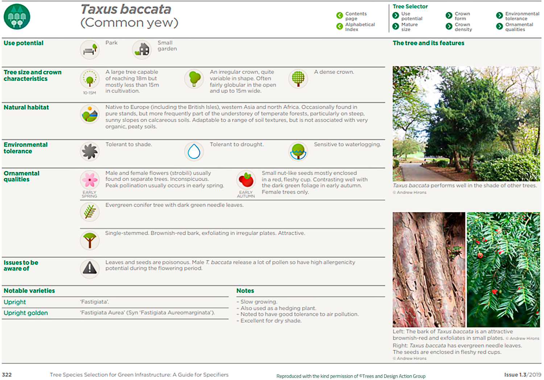 Common yew (Taxus baccata)
