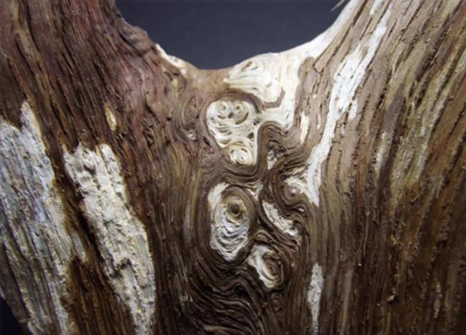 Whirled wood grain pattern forming an interlock between two limbs in a mature oak tree