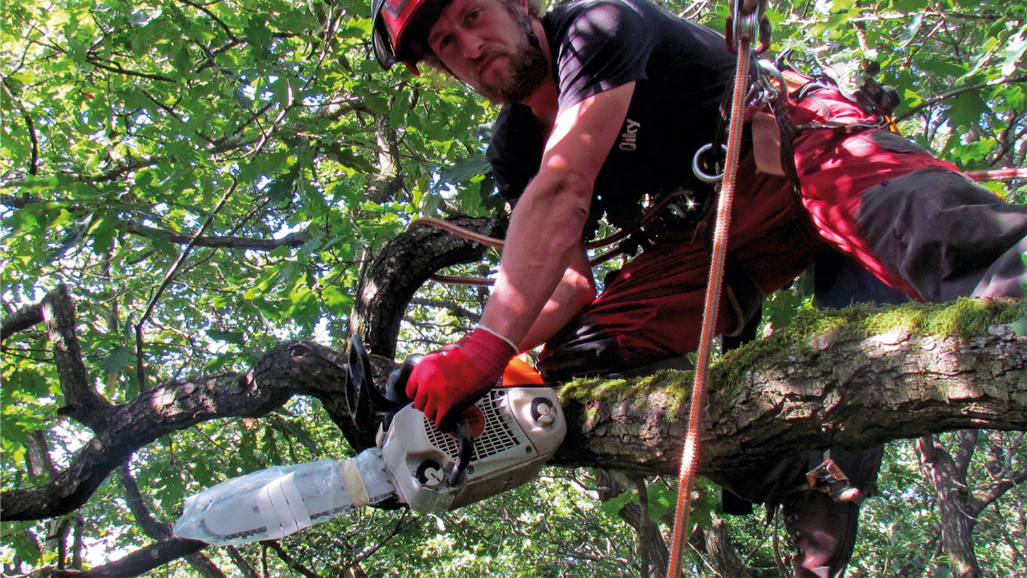 Climber Jake Radford preparing to carry out veteranisation treatments: 70%25 isopropanol and 10%25 bleach was used to sterilise bars, chains and side-cover interiors between treatments.
