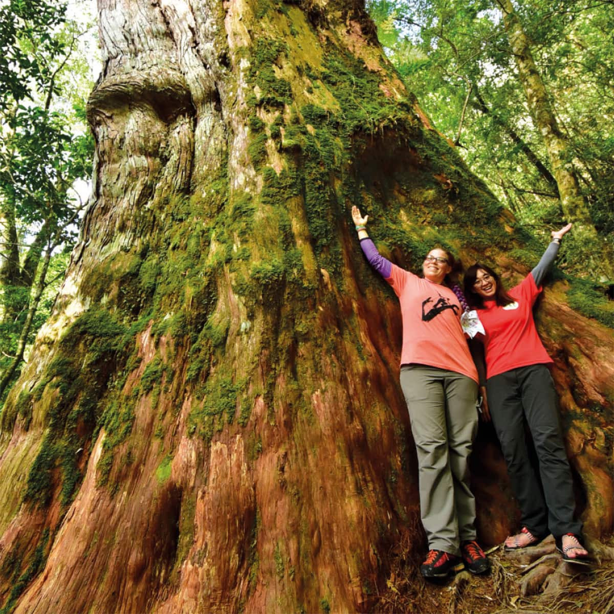 Boel and Sylvia Hsu next to one of the big ancient Formosan cypress trees in the Lalashan mountains of Taiwa